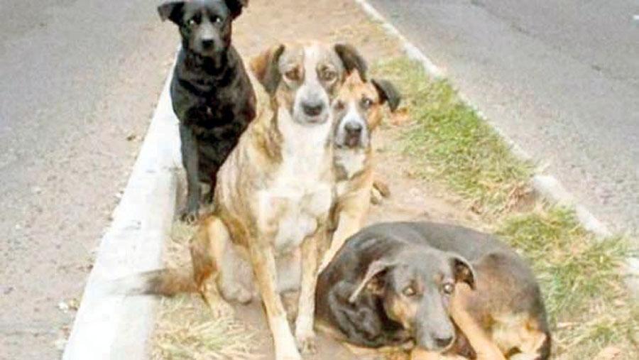 Perros callejeros