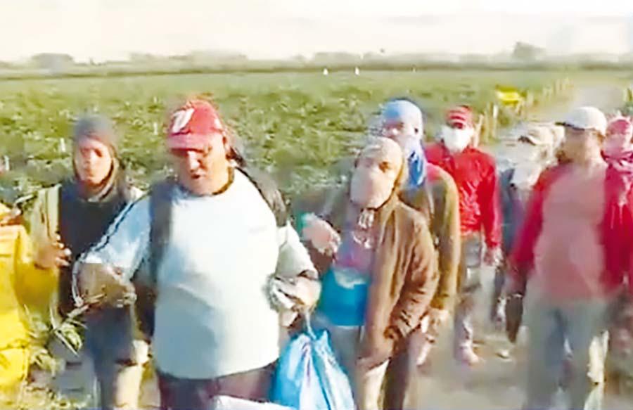 Venezolanos son explotados en campos de Casma
