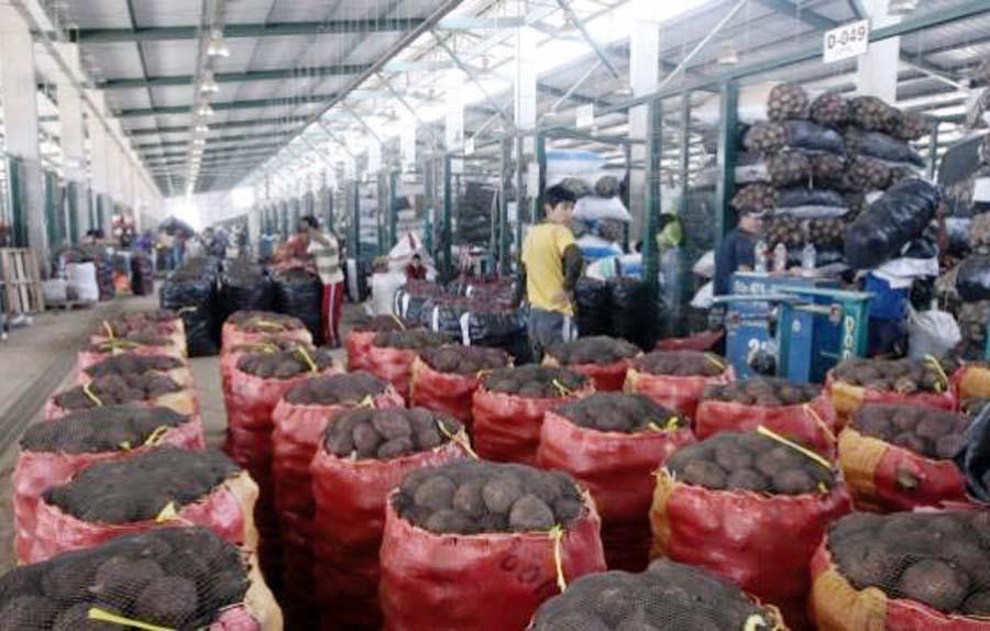 Mercado Mayorista de Lima
