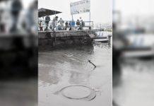 Arca Continental Lindley afecta fauna marina