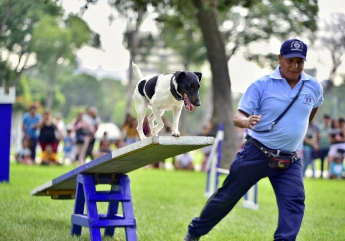 Exhibición de canes