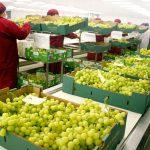 Agroexportaciones