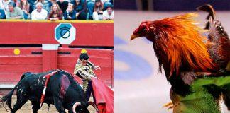 Corrida de toros y pelea de gallos