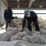 Alpaca y algodón peruano