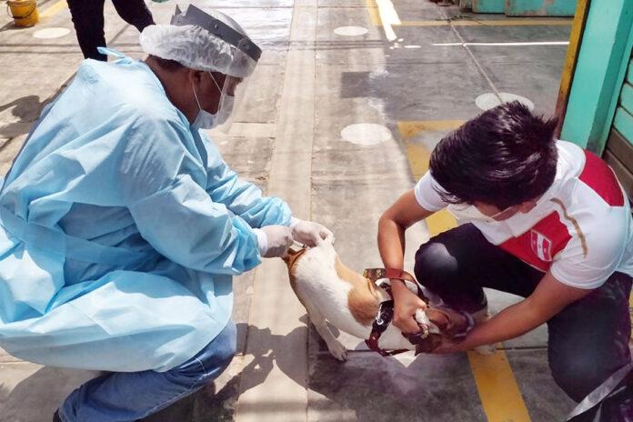 Gobierno Regional del Callao inicia campaña contra la rabia
