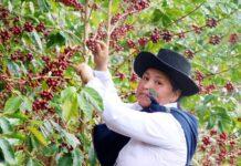 Café cusqueño recauda $42 mil en subasta internacional