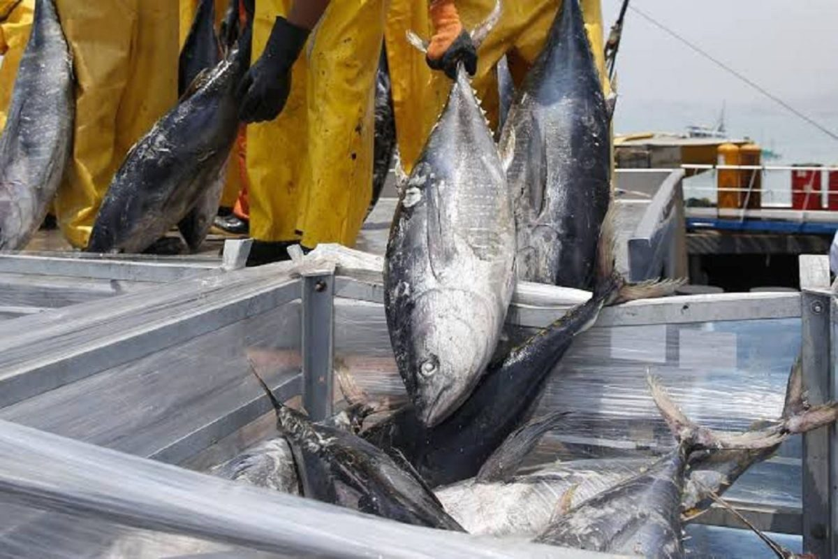 Pesca de atún genera empleo e ingresos de divisas