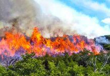 Incendios forestales