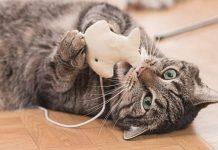 Los felinos tienen mucha energía por naturaleza y necesitan gastarla. Esto ayuda a evitar conductas dañinas.