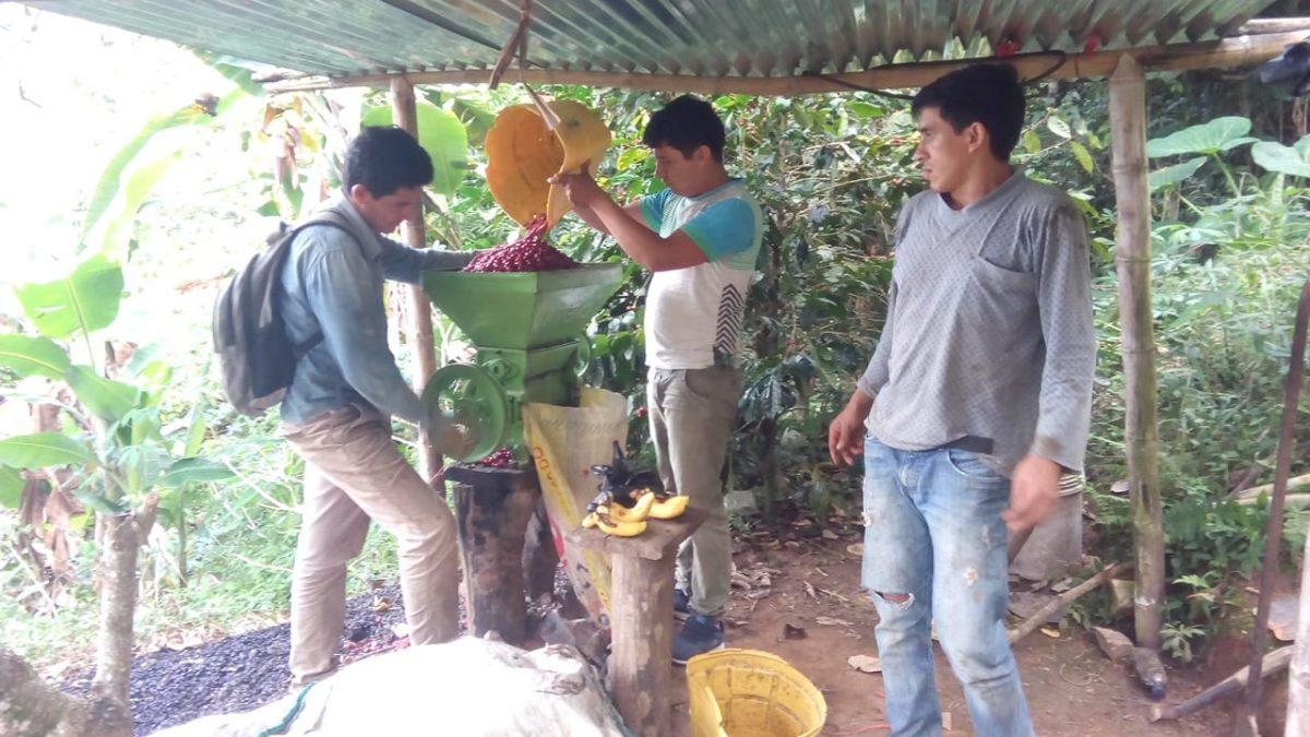 Cafés de Cuzco y Cajamarca ganadores de concurso