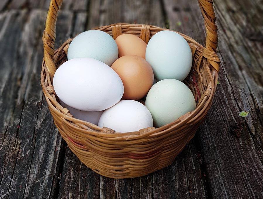 APA compartirá 20 mil huevos por el día mundial de este alimento